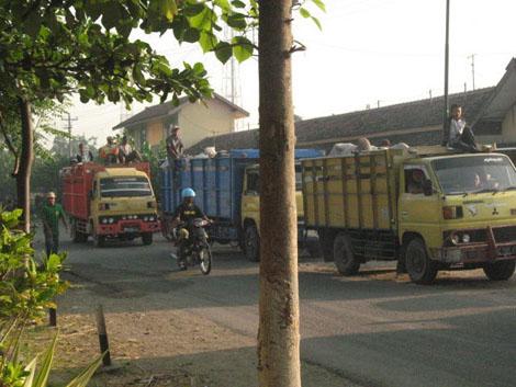 sapi diangkut menggunakan truk