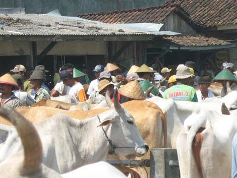transaksi jual beli sapi di Pasar Pahing