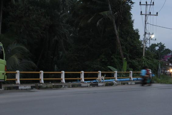 Sampah yang tersangkut di pagar jembatan Kayu Samuk, Solok. Sungai dibawahnya mengalir dan menyatu dengan Batang Lembang yang bermuara di Singkarak (2014).