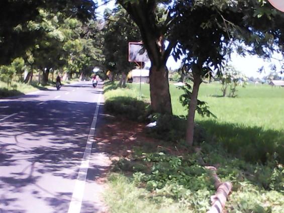 Hamparan sawah berada di sepanjang jalur menuju Kawasan Wisata Senggigi.