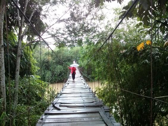 Kebun bambu di daerah Cimarga.